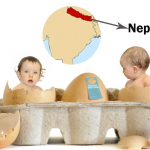 Surrogacy Packages in Nepal | Surrogacy Cost in Nepal